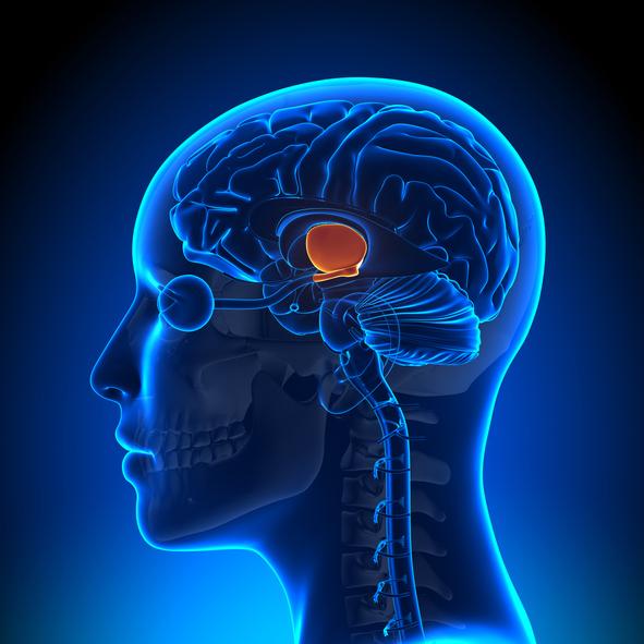 sistema limbico bbc fad ECM